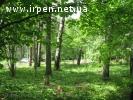 Дмитровка, продам красивый лесной участок 10 га, можно частя