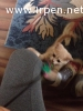 Котенок скоттиш страйт персикового окраса с подарками!