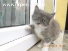 ОТДАМ ДАРОМ  чудесного котенка