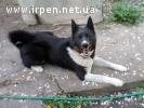Пропала собака.Нашедшему ВОЗНАГРАЖДЕНИЕ!!!