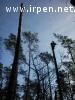 Видалення аварійних дерев, кронування