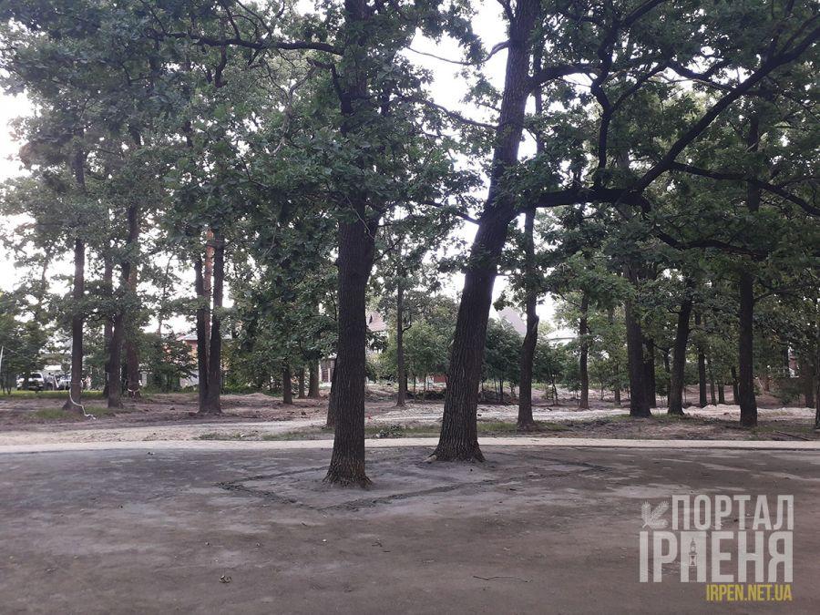 Цементировали ли деревья в парке «Победы» или дезинформация?