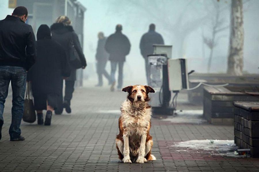 Зграя собак тримає у страху район БКЗ