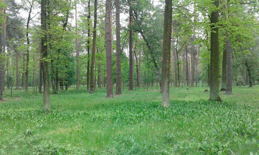Прокуратура не дала знищити 15 га лісу в м. Ірпінь, який на підставі незаконної заяви мэра міста був відчужений під забудову